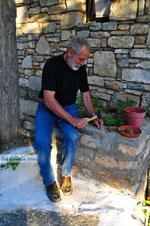 Noten kraken in Alonissos stad | Sporaden | De Griekse Gids