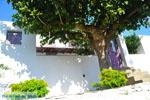 Alonissos stad (Chora)   Sporaden   De Griekse Gids foto 115