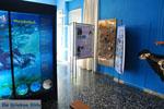 MOM, bescherming Monachus-Monachus zeehonden Alonissos | Sporaden foto 4